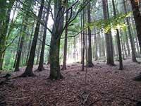 Sonnenaufgang Wald Bayern